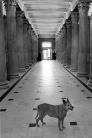 Photograph of Alice in the Capitol