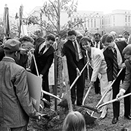 Congresswoman Schneider and other Members of Congress planted a tree outside the U.S. Botanic Gardens in April 1989.