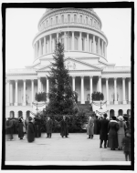 The origins of the Capitol Christmas tree