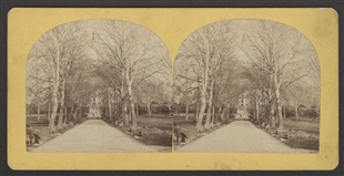 The West Park of the U.S. Capitol Stereoview