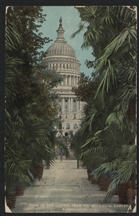 Dome of the Capitol from the Botanical Garden Washington, D.C. Postcard